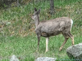 5 14 19 herd of deer on the side of the road KS (6 of 10)