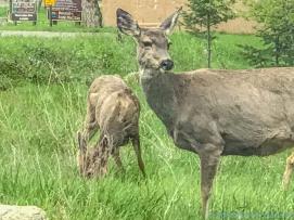 5 14 19 herd of deer on the side of the road KS (8 of 10)