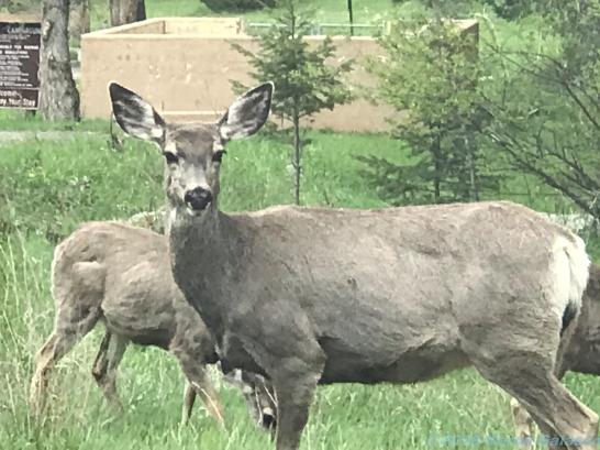 5 14 19 herd of deer on the side of the road KS (9 of 10)