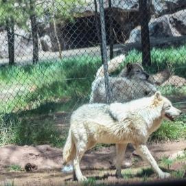 5 4 19 Bearizona Williams AZ (12 of 48)