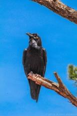 5 4 19 Bearizona Williams AZ (43 of 48)