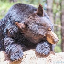 5 4 19 Bearizona Williams AZ (48 of 48)