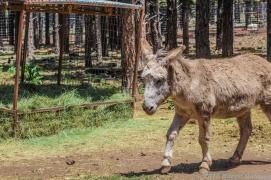 5 4 19 Bearizona Williams AZ (6 of 48)
