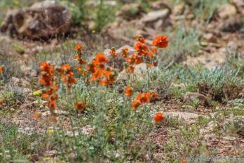 5 4 19 Meteor Crater National Park Winslow AZ (7 of 9)