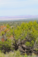 5 6 19 Painted Desert Vista near Flagstaff AZ (2 of 9)