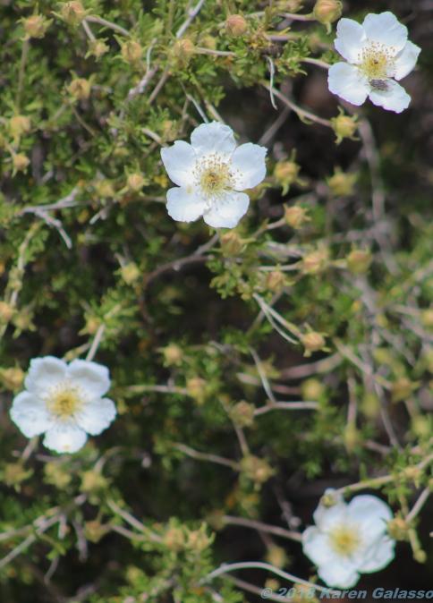 5 6 19 Painted Desert Vista near Flagstaff AZ (7 of 9)