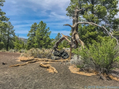 5 6 19 Part of Sunset Crater Volcano North of Flagstaff AZ #2 (11 of 17)