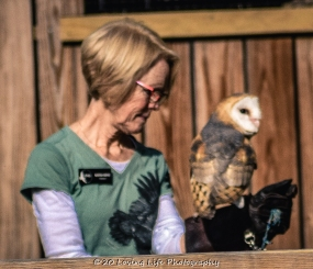10 22 17 Barn Owl (2 of 4)