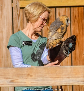 10 22 17 Barn Owl (3 of 4)
