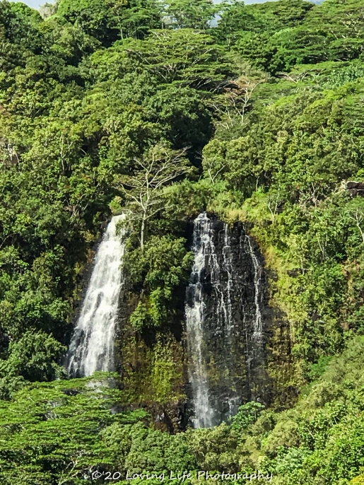 11 14 17 Opaekaa Falls (4 of 10)