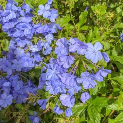 11 15 17 Kauai flowers (1 of 4)