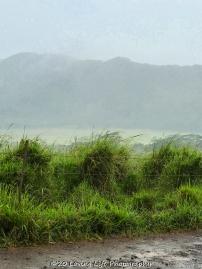 Kauai ATV Mud Bug Waterfall Tour (8 of 14)