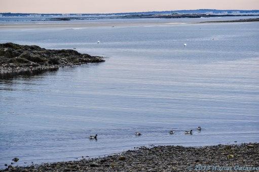 4 13 18 Vines Landing & Fortune's Rock Beach (1 of 23)