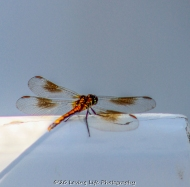 7 9 20 Birds Dragonfly & Ducks (13 of 15)