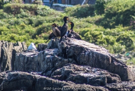 7 9 20 Nubble Lighthouse Tour with Finestkind (25 of 143)