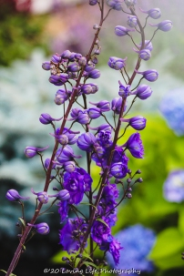 7 9 20 Perkins Cove flowers (1 of 11)