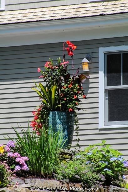 7 9 20 Perkins Cove flowers (2 of 4)