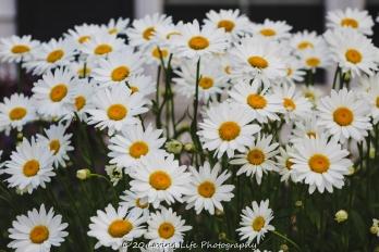 7 9 20 Perkins Cove flowers (7 of 11)
